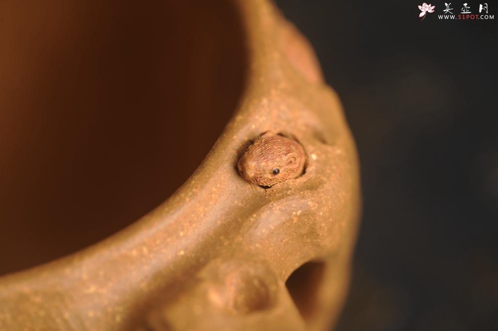 紫砂壶图片:美杯精品特惠 实力演绎全手工老黄段泥松鼠杯 松鼠灵动 贴叶生动 不失为一把好杯 - 宜兴紫砂壶网